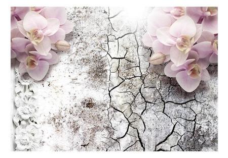 Fototapeta - Pąsowe orchidee