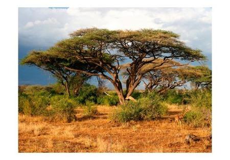 Fototapeta - W krainie Samburu, Kenia