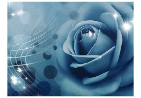 Fototapeta - Blue rose