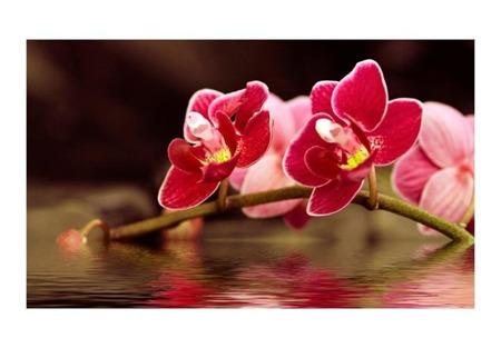 Fototapeta - Delikatne orchidee na wodzie