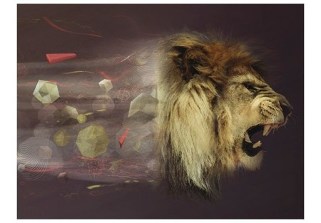 Fototapeta - Dziki gniew