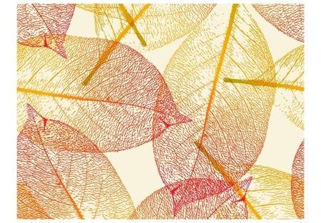 Fototapeta - Jesienne liście