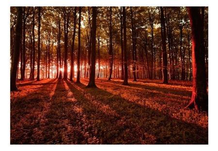Fototapeta - Jesienny poranek