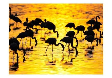 Fototapeta - Kenia - flamingi na jeziorze Nakuru