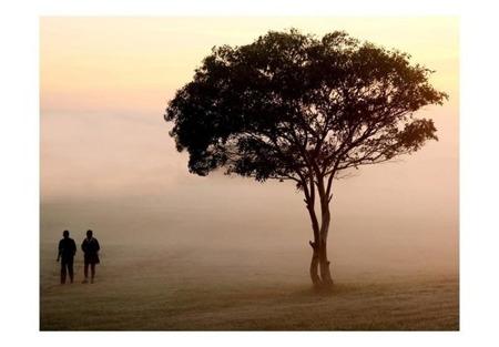 Fototapeta - Misty morning walk