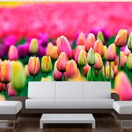 Fototapeta - Pole tulipanów