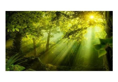 Fototapeta XXL - W tajemniczym lesie II